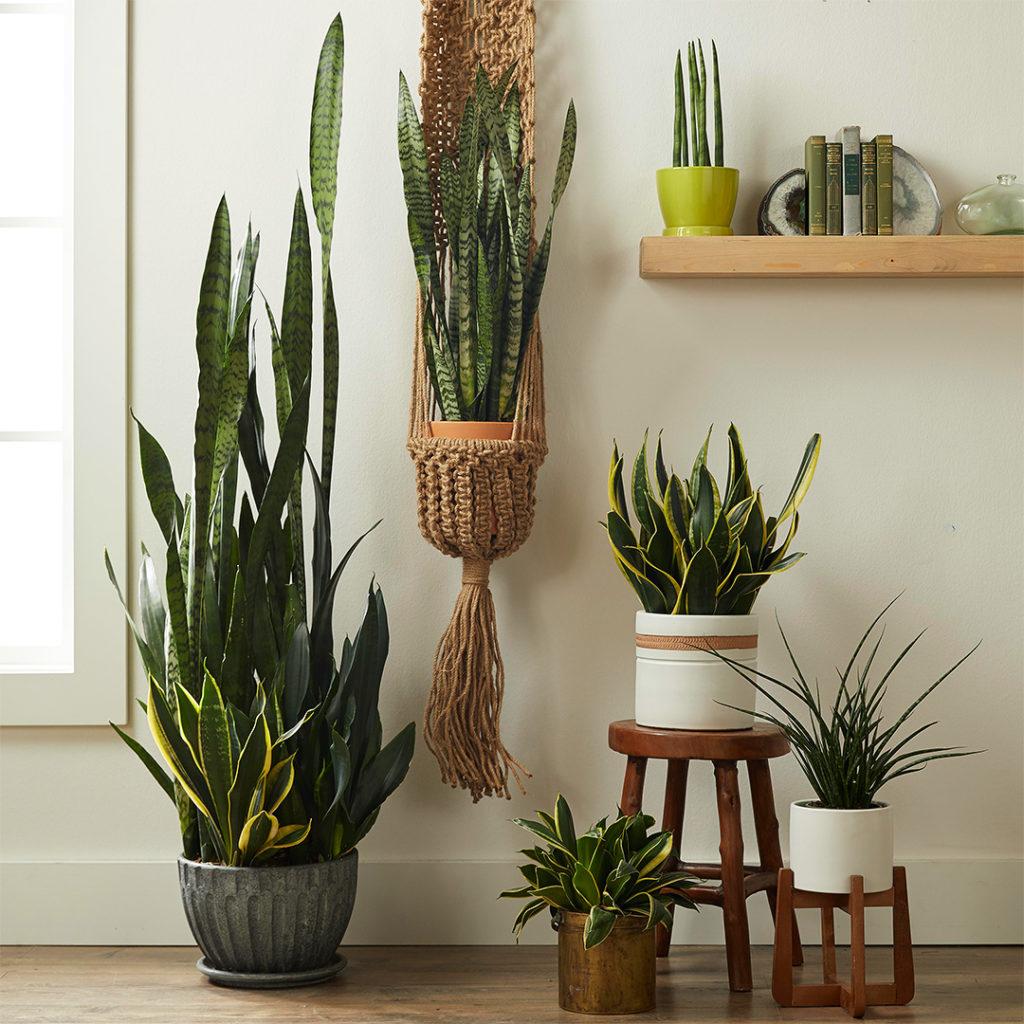 plantas para o quarto