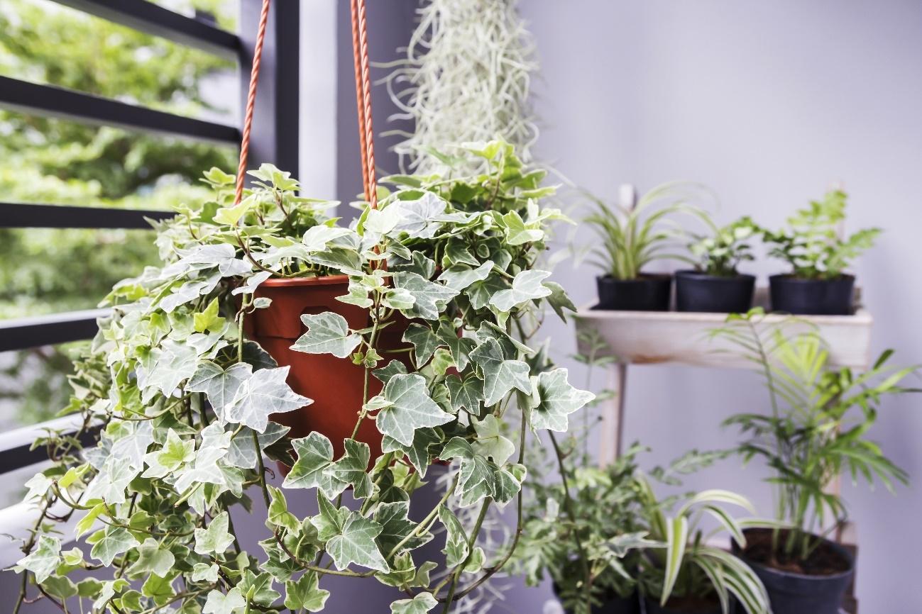 Como as plantas podem melhorar os ambientes da sua casa e escritório