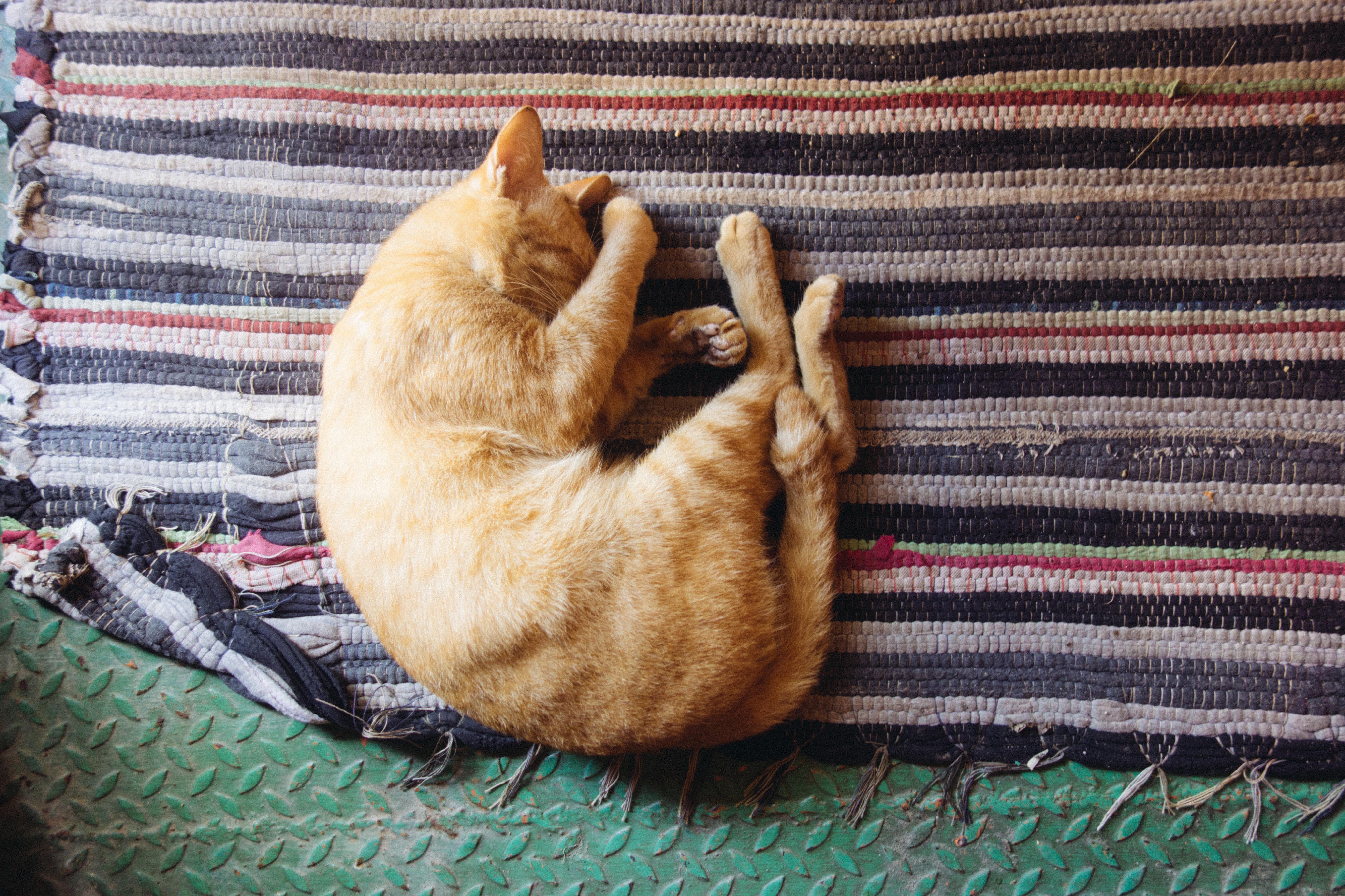 Pets no apartamento: 4 cuidados para quem mora em prédios