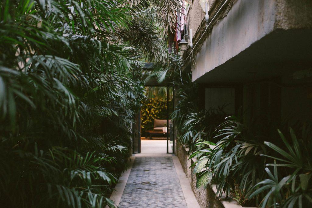 corredor verde